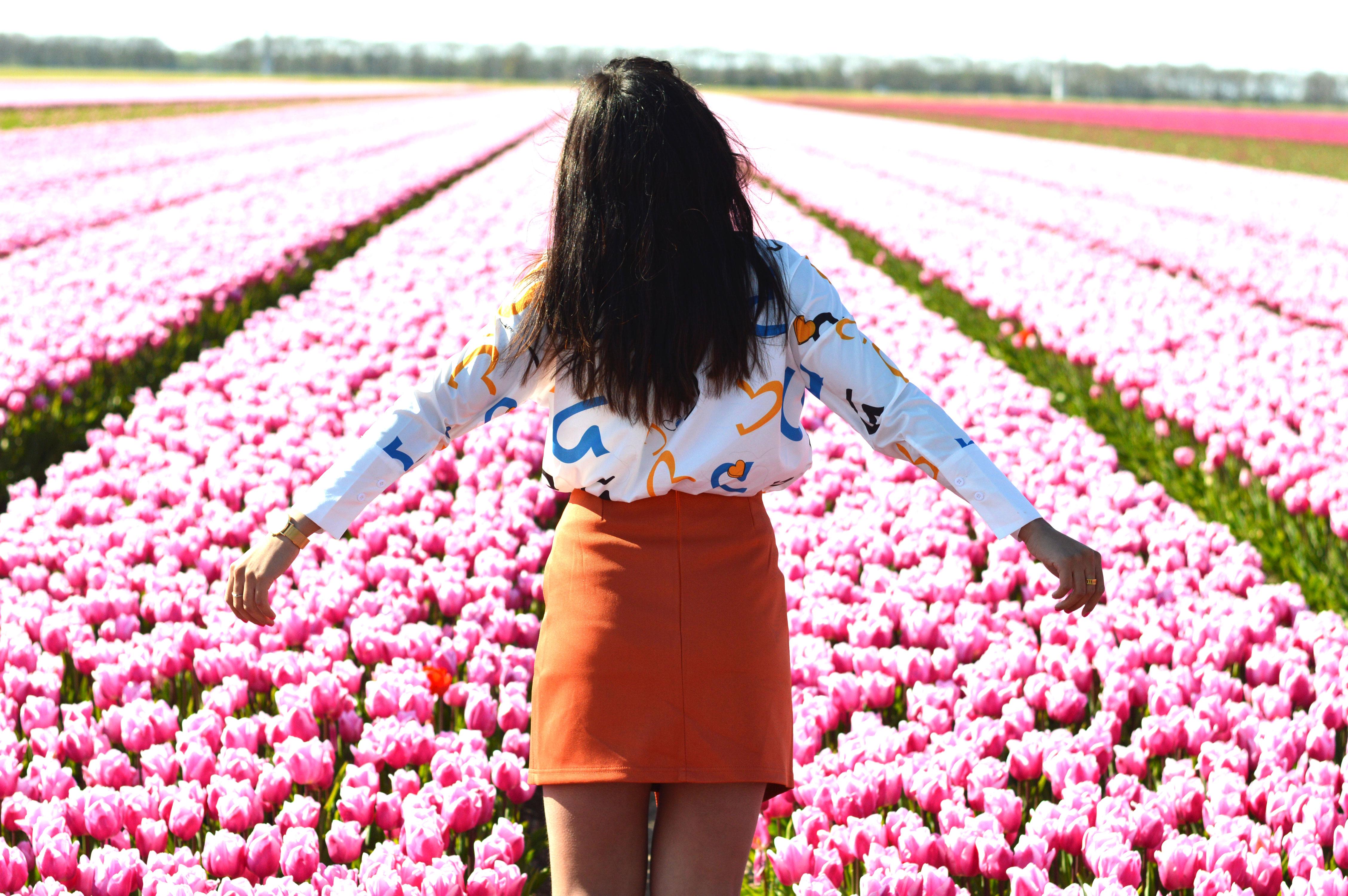 tulipsinholland