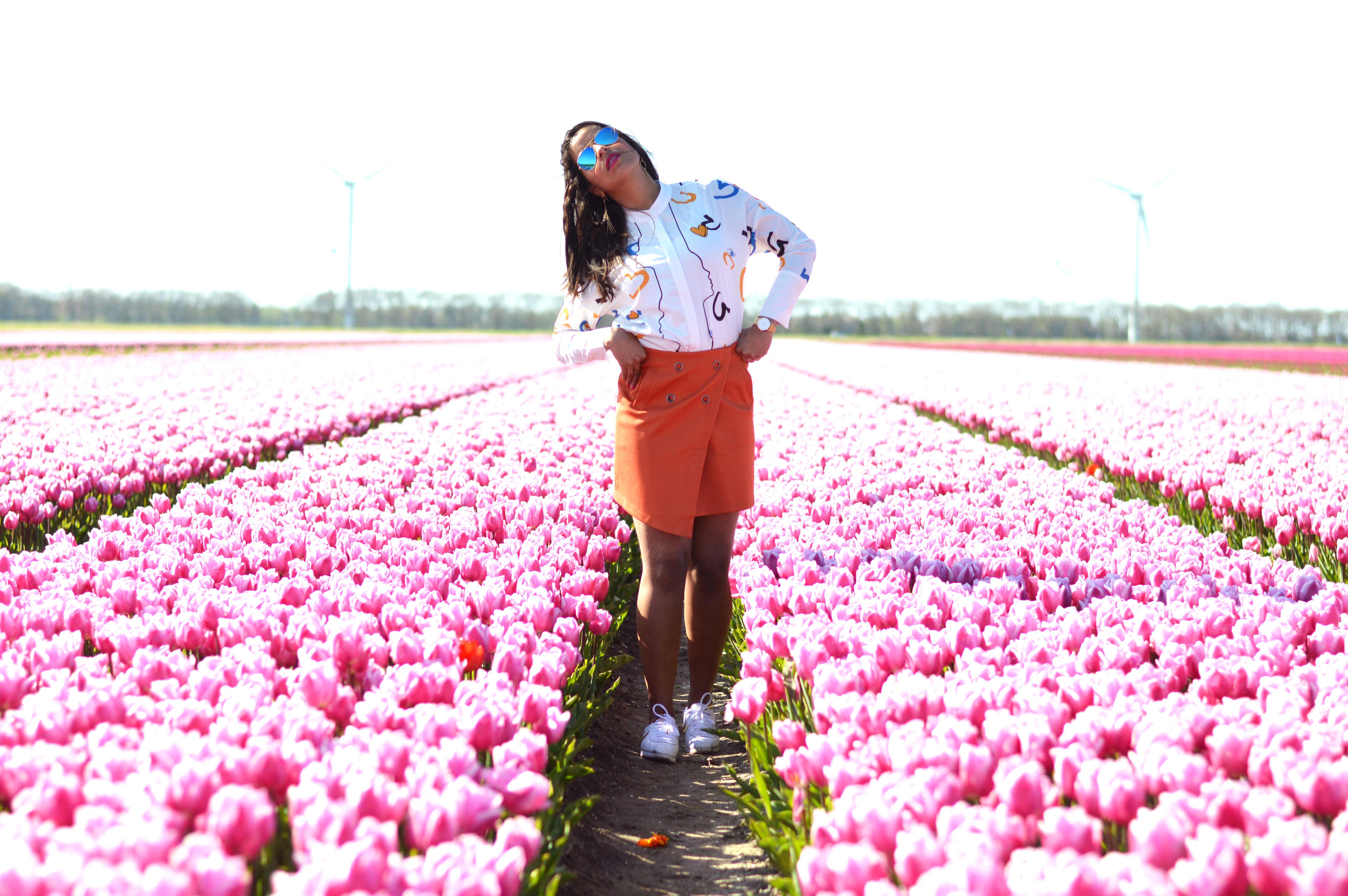 tulipsinholland11