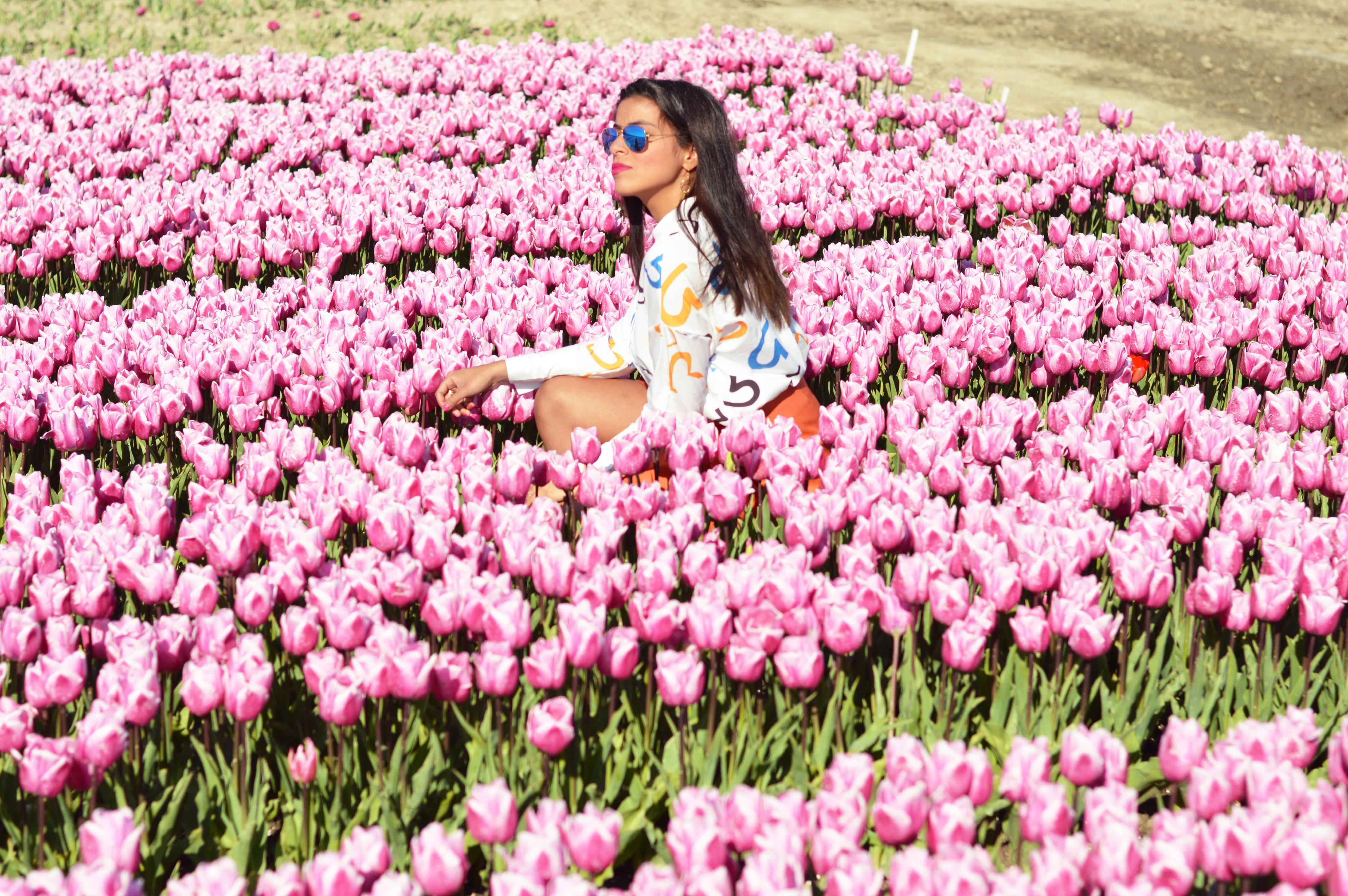 tulipsinholland3