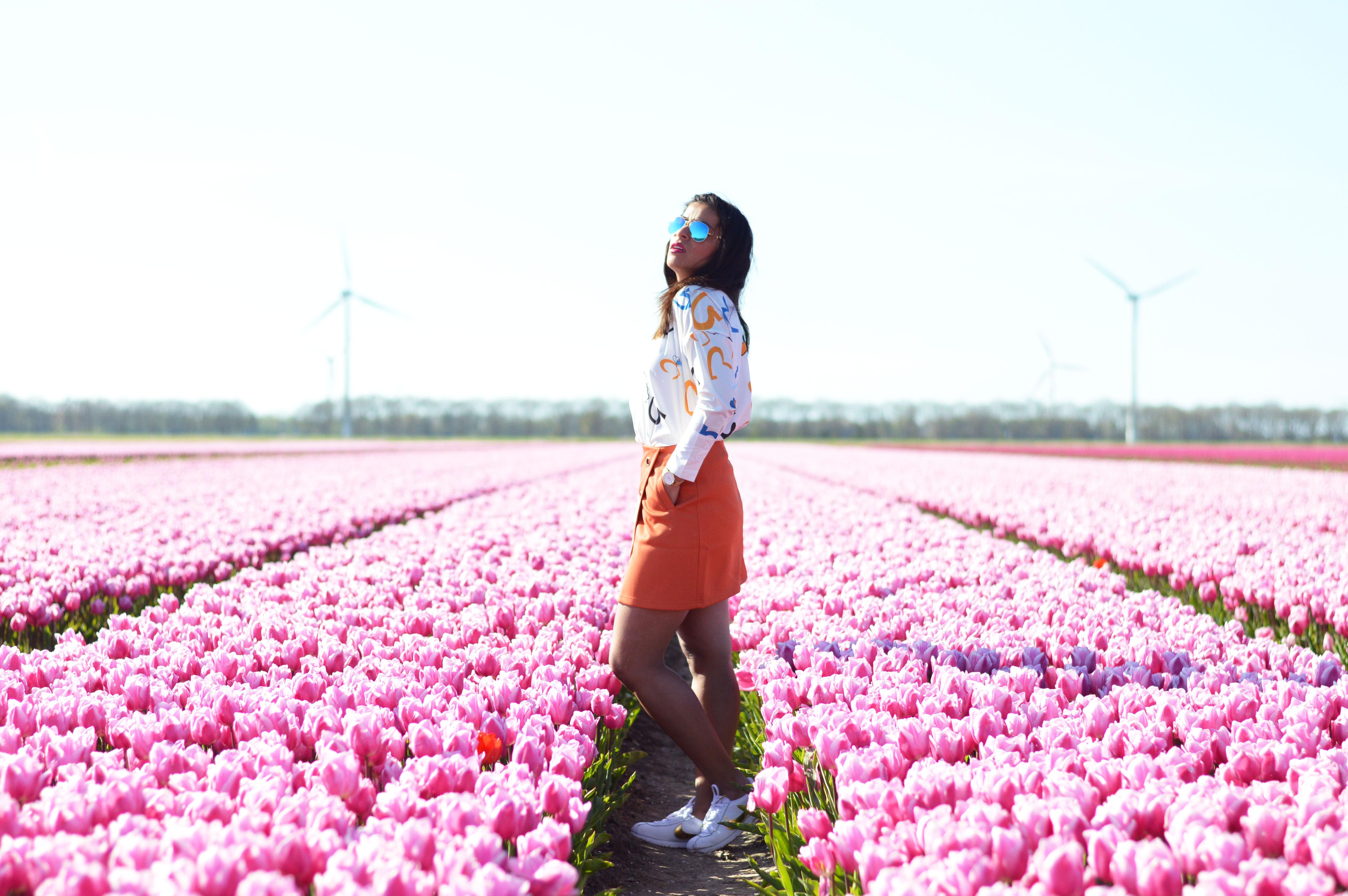 tulipsinholland7