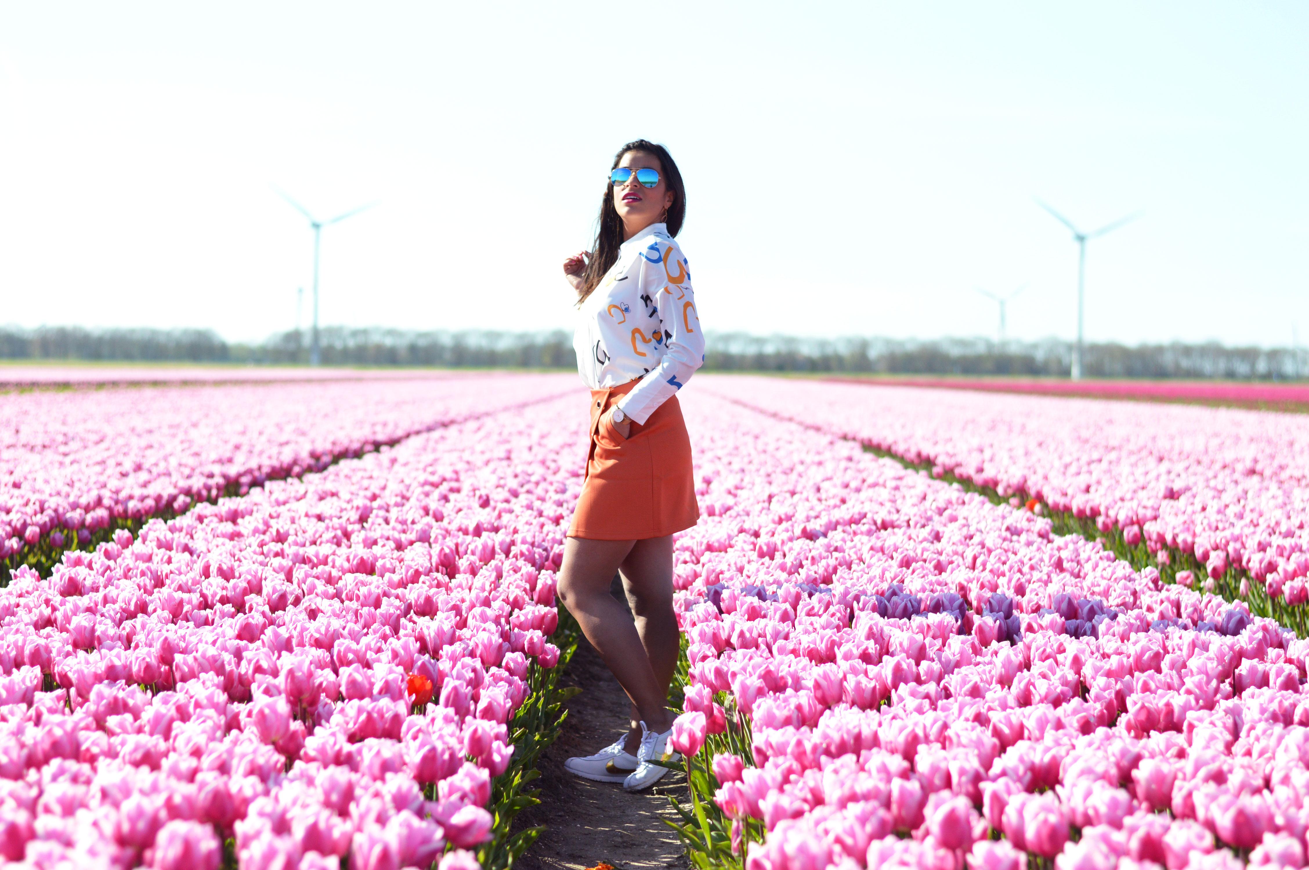 tulipsinholland9